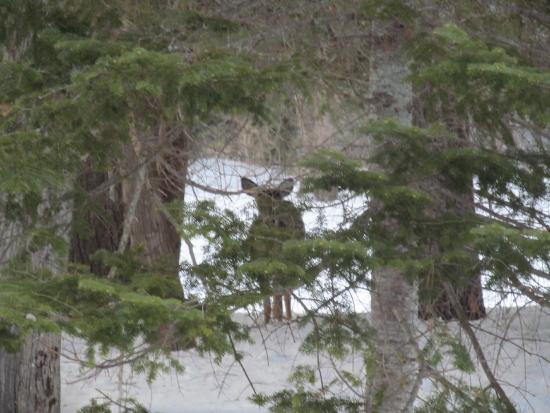 Medway, ME: Peek-a-boo a white tailed deer trying to get a better look at me