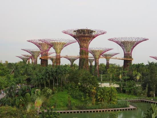 taman yang indah picture of gardens by the bay