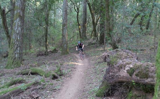 Sonoma Bike Guides - Day Tours