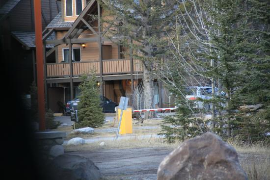 view from hot tubs picture of hidden ridge resort banff. Black Bedroom Furniture Sets. Home Design Ideas