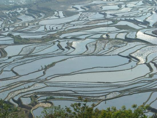 Yuanyang County, Κίνα: Terraces