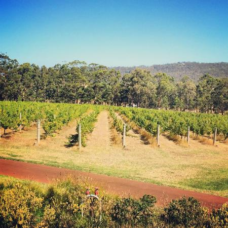 Forest Hill Vineyard
