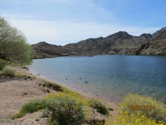Lake mohave for Willow beach fishing report