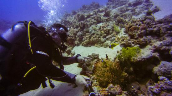 Dive club picture of reef oasis dive club sharm el - Reef oasis dive club ...