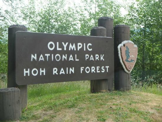 Picture of hoh rain forest olympic national park for Cabin rentals olympic national forest