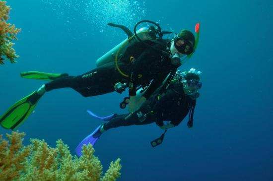 In the deep picture of reef oasis dive club sharm el - Reef oasis dive club ...