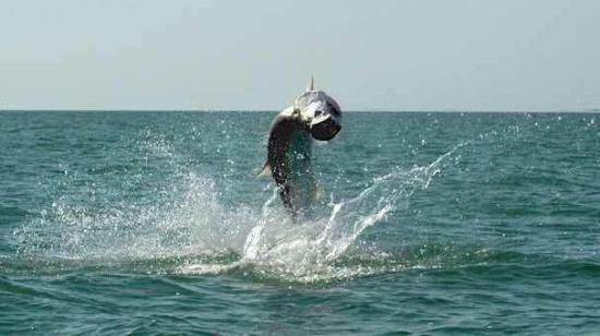 Boneafide Fishing & Nature Charters