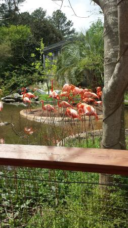 Botanical Gardens At Riverbanks Picture Of Riverbanks Zoo And Botanical Garden Columbia