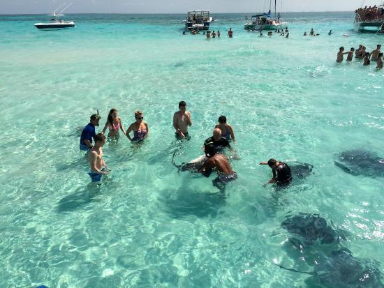 Our Group Among The Stingrays Picture Of Sotos Cruises