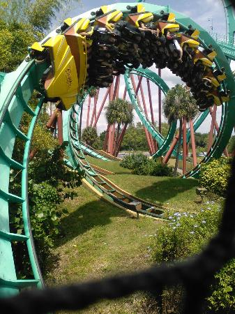 Cheatas Resting Picture Of Busch Gardens Tampa