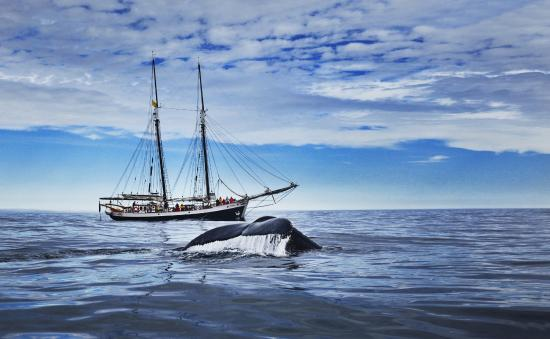North Sailing - Husavik Original Whale Watching