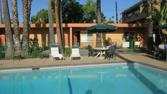 Palm Trees Next To Pool Picture Of Saga Motor Hotel Pasadena Tripadvisor