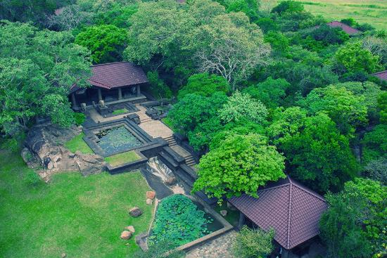 Backyard Forest Management : Forest Rock Garden Resort (Anuradhapura, Sri Lanka) See 76 Hotel