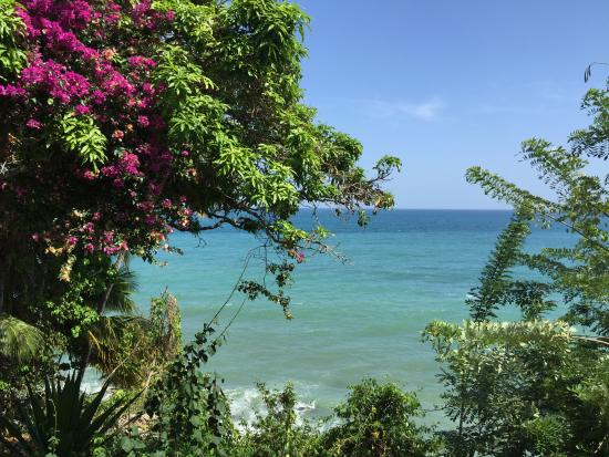 Lambeau, Tobago: View from the Dining Room