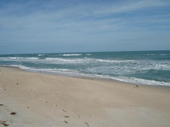 Playalinda Beach in Titusville is the most authentic Beach