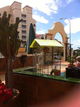 Photo of Oasis Mango Apartments Los Cristianos