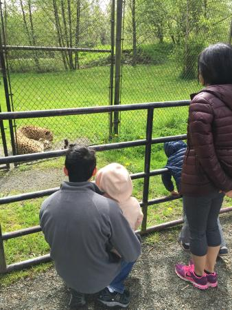 Greater Vancouver Zoo: Admiring the cheetah