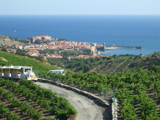 Le petit train for Les jardins de collioure