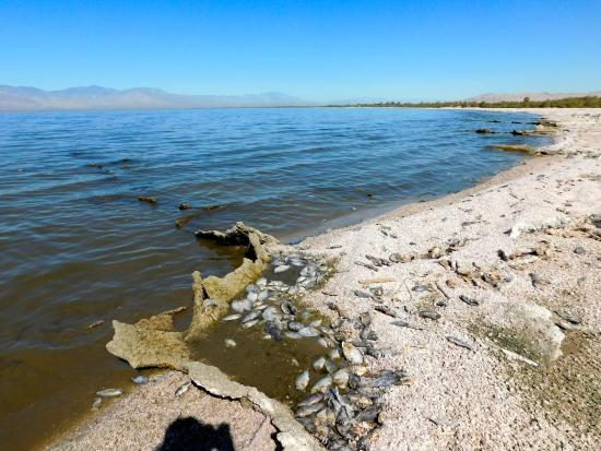 Dalton sea 3 picture of salton sea california tripadvisor for Salton sea fishing report
