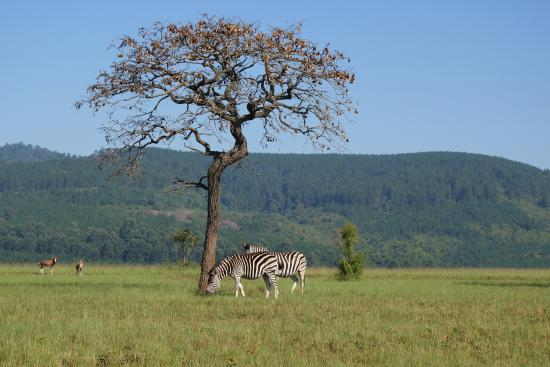 Mlilwane Wildlife Sanctuary - Day Tours
