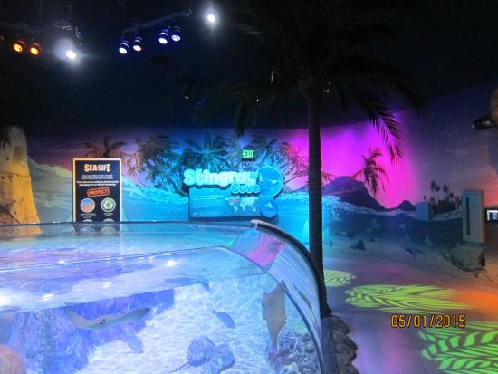 Exhibits Picture Of Sea Life Orlando Aquarium Orlando