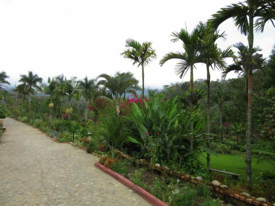 Walking Path Picture Of Vallarta Botanical Gardens