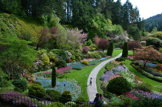 Fountains Picture Of Butchart Gardens Central Saanich Tripadvisor