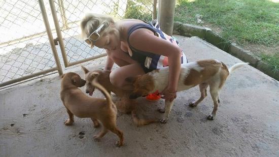 Such playful dogs - Picture of Soi Dog Foundation, Phuket ...