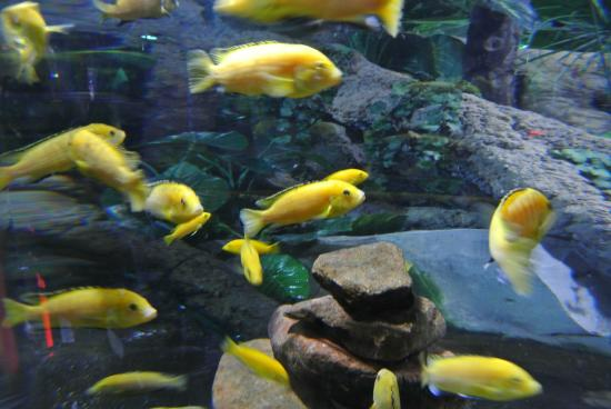 Aquarium zoo near me di dubai aquarium underwater zoo for Tropical fish near me