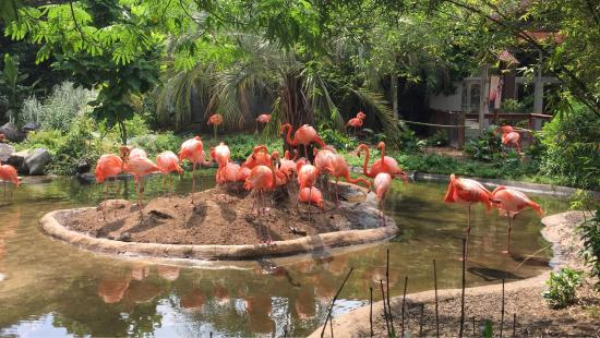 Riverbanks Zoo Was Great Picture Of Riverbanks Zoo And Botanical Garden Columbia Tripadvisor