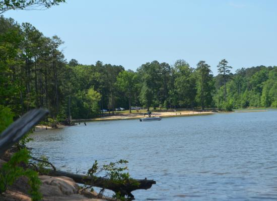 View of the beach in loop b from loop c shoreline for Jordan lake nc fishing