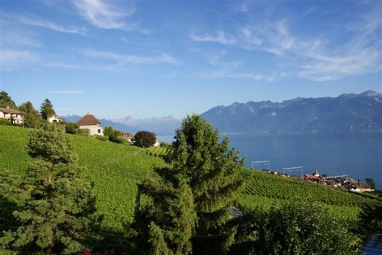 Grandvaux, Ελβετία: Surrounded by vineyards