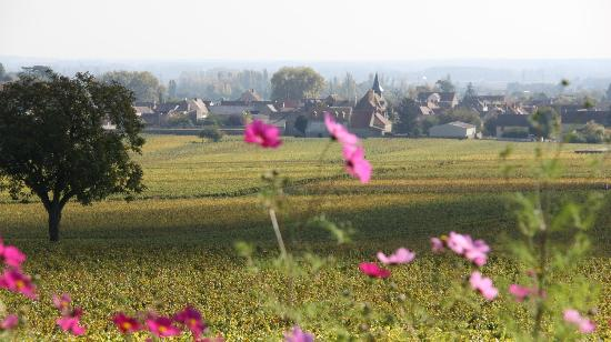 Divine Bourgogne Tours - Day Tours
