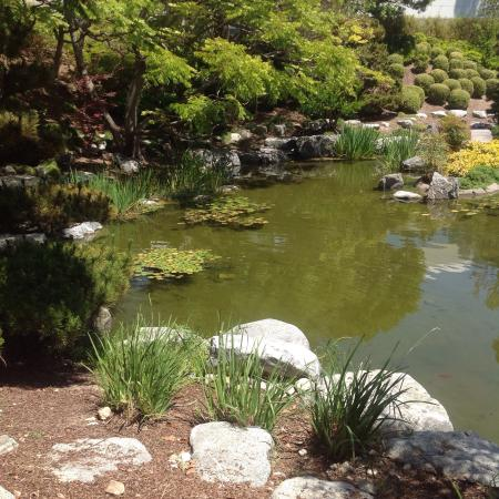 Beautiful koi pond picture of karl strauss brewery for Beautiful koi ponds