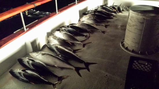 Fishes for H m landing fishing report