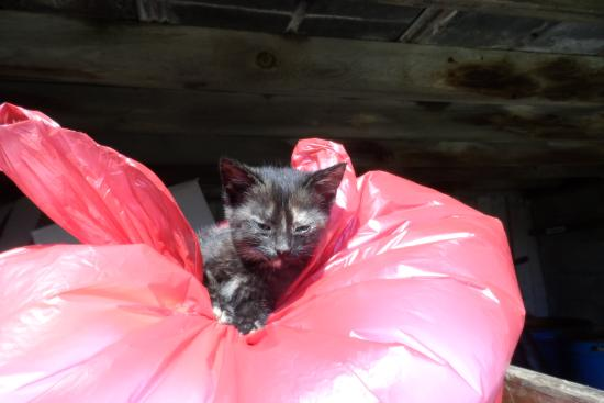 Verdant View Farm Bed and Breakfast: Kitty on a trash bag