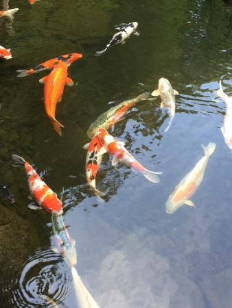 Beautiful sand garden picture of portland japanese for Portland japanese garden koi