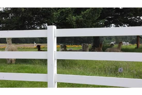 Krystal Acres Alpaca Farm and Country Store