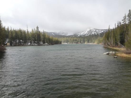 Everyone catches fish at lake mary picture of lake mary for Mammoth lakes fishing report