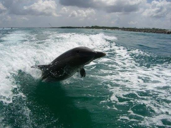 Getlstd property photo picture of northwest florida for Dolphin fishing florida