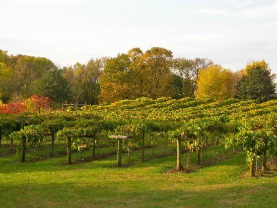 Chisago City United States  city photo : ... Winery and Vineyard Photo: Winehaven Vineyard, Chisago City, Minnesota