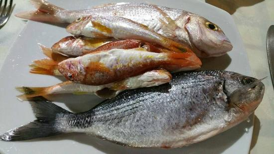 Great variety of fresh fish daily picture of bacchus for Daily fresh fish
