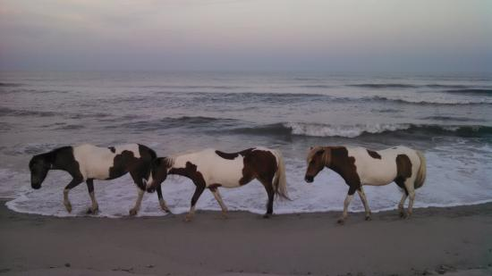 Assateague State Park Camping