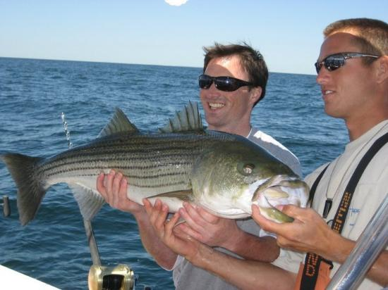 Nice bass picture of high hook charter fishing plymouth for Fishing charters plymouth ma