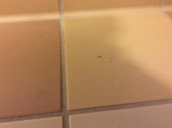Fairfield Inn Idaho Falls: Hairs on the bathroom floor
