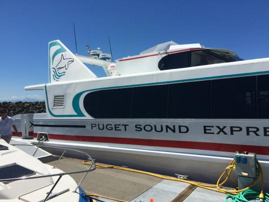 Puget Sound Express  Whale Watching