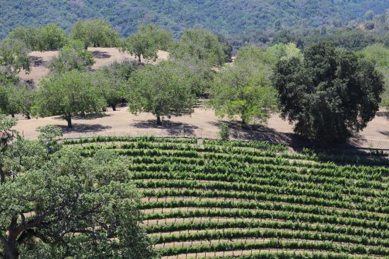 Photo of Belvino Viaggio Paso Robles