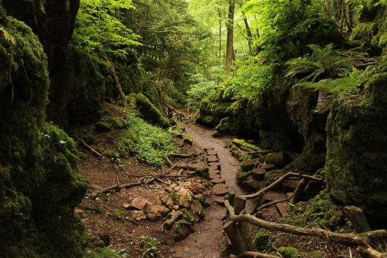 Coleford United Kingdom  City new picture : Puzzlewood Picture of Puzzlewood, Coleford TripAdvisor