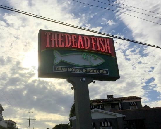 The dead fish main sign picture of the dead fish for Dead fish crockett