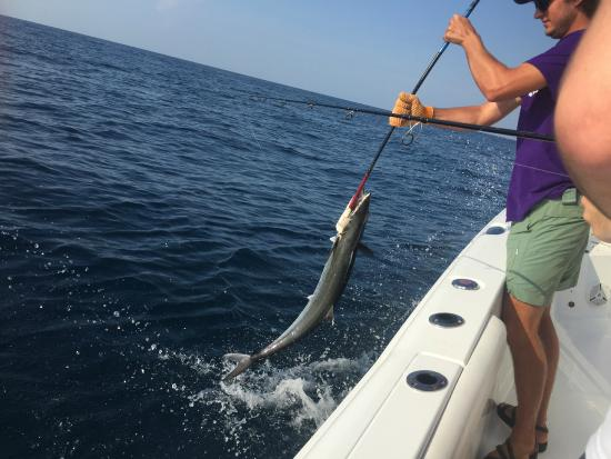 King mackerel picture of gulf angler fishing charters for Gulf shores fishing charter rates